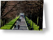 Alley Of Trees With Runners And Joggers Greeting Card