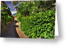 Alley With Green Plants Greeting Card