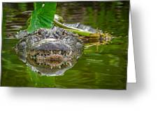 Alligator 2 Greeting Card