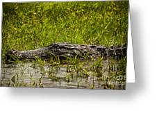 Alligator Amoungst Us Greeting Card
