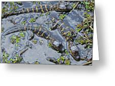 Alligator Babies IIi Greeting Card