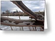 Alligator Branch Greeting Card