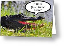Alligator Greeting Card Greeting Card