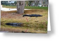 Alligator Hazard Greeting Card