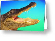 Alligator Head With Open Mouth Greeting Card