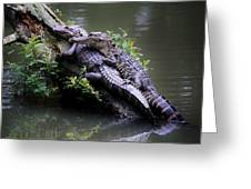 Alligator Mates Greeting Card
