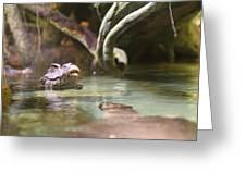 Alligator - National Aquarium In Baltimore Md - 12121 Greeting Card