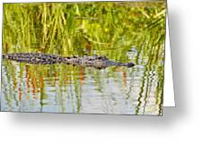 Alligator Reflection Greeting Card by Al Powell Photography USA