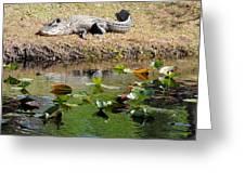 Alligator Sunbathing Greeting Card