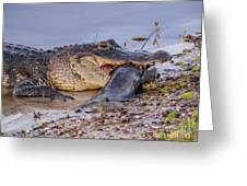 Alligator With A Fish Greeting Card