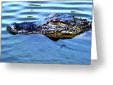 Alligator With Spider Greeting Card