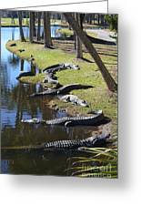 Alligators Beach Greeting Card