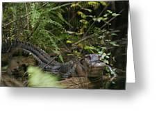 Alligator's Life Greeting Card