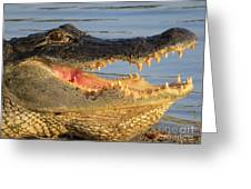 Alligator's  Mouth Greeting Card