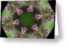 Allium 2 Greeting Card