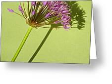 Allium Greeting Card