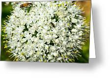 Allium Flower And Lightning Bug Greeting Card