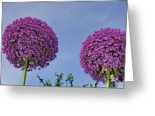Allium Flowers Greeting Card