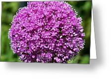 Allium Globe Greeting Card