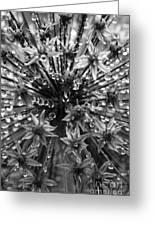 Allium Jewels Greeting Card