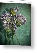 Allium Wildflower With Grunge Textures Greeting Card