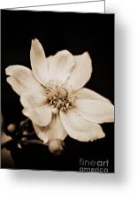 Alluring Anemone Greeting Card