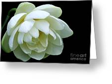 Alluring Lotus Greeting Card
