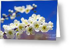 Almond Blossom Greeting Card by Carlos Caetano