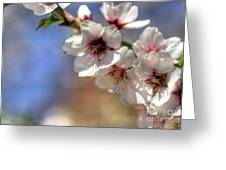 Almond Blossoms Greeting Card