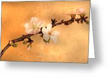 Almond Flowers Greeting Card