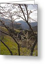 Almond Tree And Monastery   #9815 Greeting Card