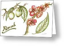 Almond With Flowers Greeting Card