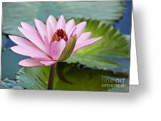 Almost In Full Bloom Greeting Card