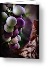 Almost Ripe Grapes Greeting Card
