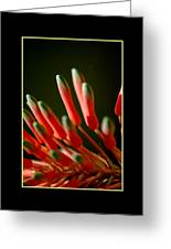 Aloe Bloom Window 2 Greeting Card
