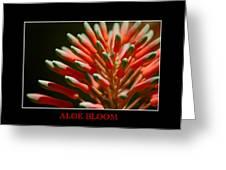 Aloe Bloom Window Greeting Card