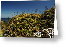 Aloe Is Anyone There Greeting Card