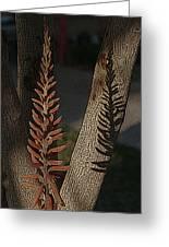 Aloe Stalk Greeting Card