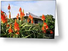 Aloe Vera And Tin Roof Plantation House Greeting Card