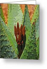 Aloe Vera's New Buds Greeting Card