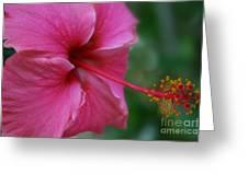 Aloha Aloalo Ulu Wehi Pink Tropical Hibiscus Wilipohaku Hawaii Greeting Card