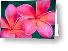Aloha Hawaii Kalama O Nei Pink Tropical Plumeria Greeting Card