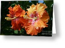 Aloha Keanae Tropical Hibiscus Greeting Card