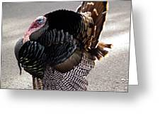 Aloha Turkey II Greeting Card