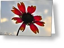 Alone Flower I Mlo Greeting Card
