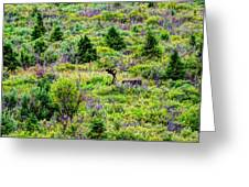 Alone In Grizzly Country Greeting Card