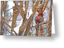 Alone In The Snow Storm Greeting Card