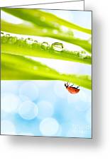 Alone Ladybug Greeting Card