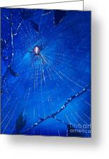 Along Came A Spider. Greeting Card
