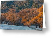 Along Miwok Trail In Winter Greeting Card